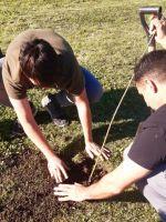 Plantaron sauces criollos donde habían sido salvájemente talados