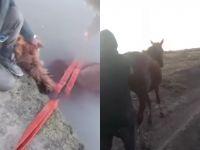 Heroico rescate de los bomberos de Viedma: le salvaron la vida a un caballo que se cayó a un canal de riego