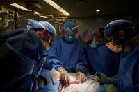 Histórico avance científico: trasplantaron un riñón de cerdo a un cuerpo humano y fue un éxito