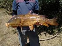 Describen la forma y evolución de 17 variedades de peces en el río Negro