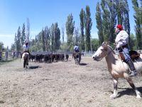 """""""Un verdadero éxito"""", así fue  la 2da Expo de Caballos de la Comarca"""